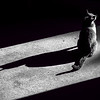 Pets - Class A - 1st - Scheve, Neva - Oliver's Shadow