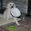 Pets - Class A - Hiscott, Brenda - I'm Hungry