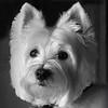 Pets - Class A - Davis, Jim - Annie