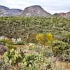 Scapes-Class A-June White-Saguaro Park