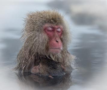 Kevin - Monkey motherhood _D6C3602