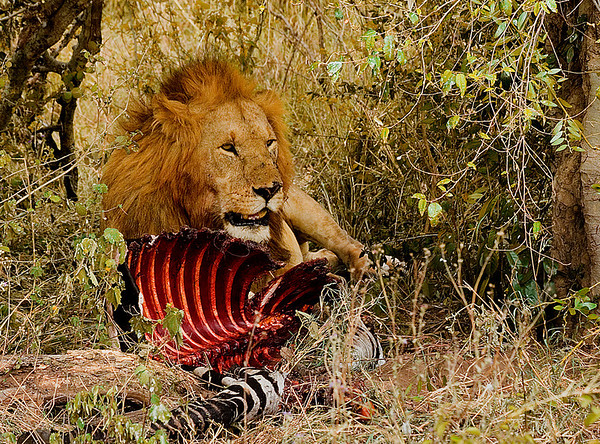 Eileen Lion guarding his kill