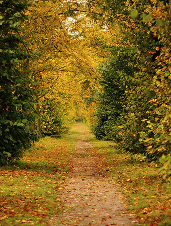 AndyS Approaching Autumn jpg