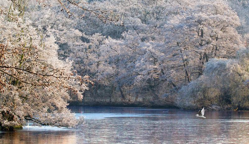annie nash frosty winter wonderland in N21