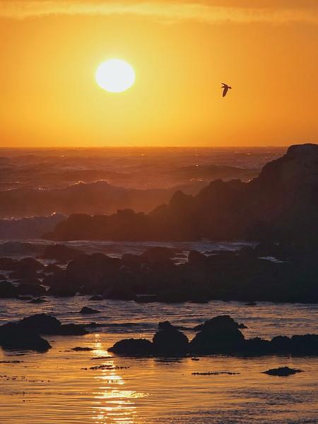 Open-Class A-Willy Chu-California Sunset