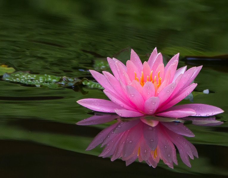 Open-Class B-Wendell Dance-Water Lily