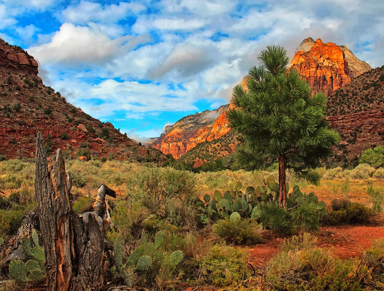Open-Class B-Bill Bower-Clearing Skies over Zion