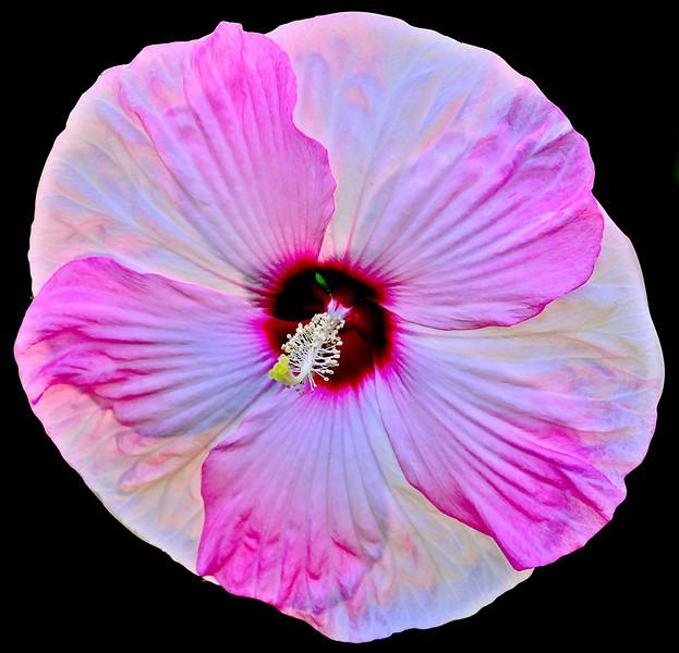 Open-Class B-Sandra Eriksson-Today's Bloom