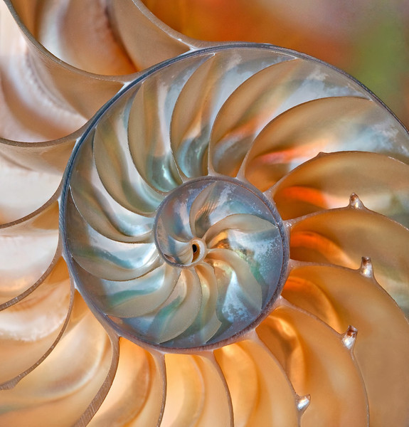 Open-Class A-Donna Ford-Nautilus