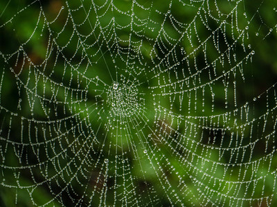 mike crowley Pearly Web
