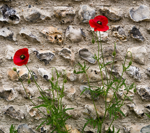 Sussex Wall