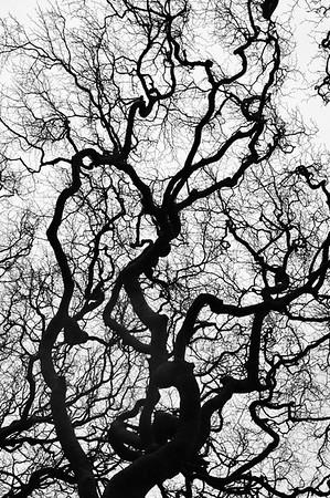 Janina Lamb - Sentinel Tree