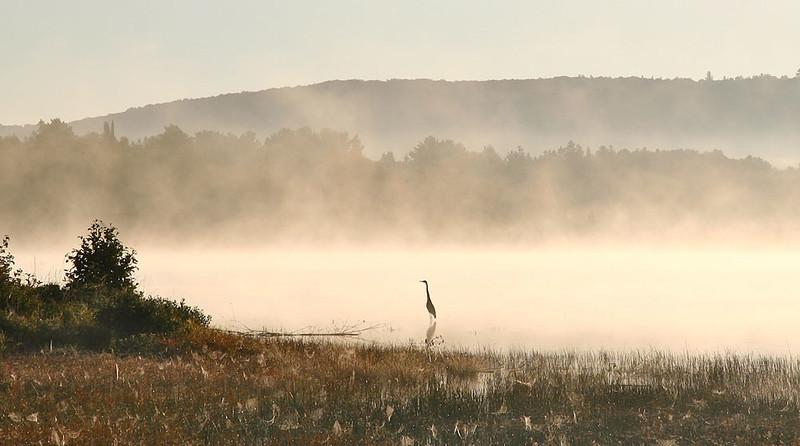 Fog at Lake