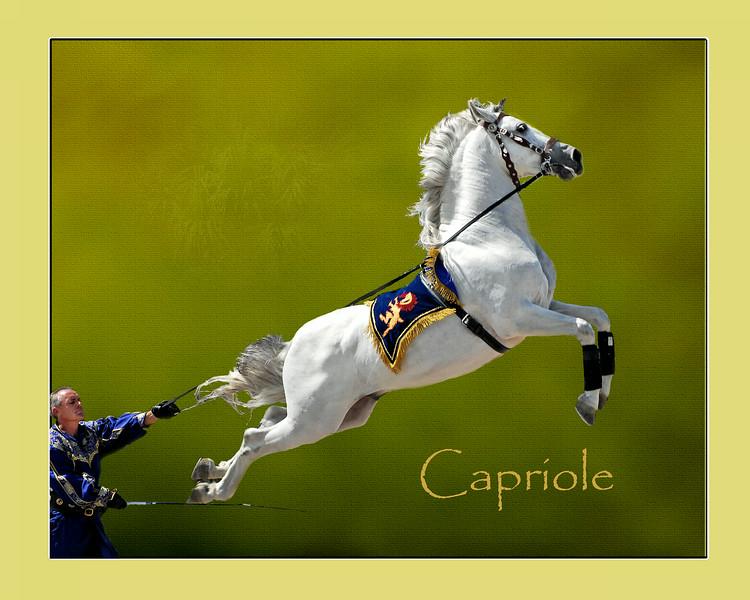 Creative-Class A-Neva Scheve-Capriole