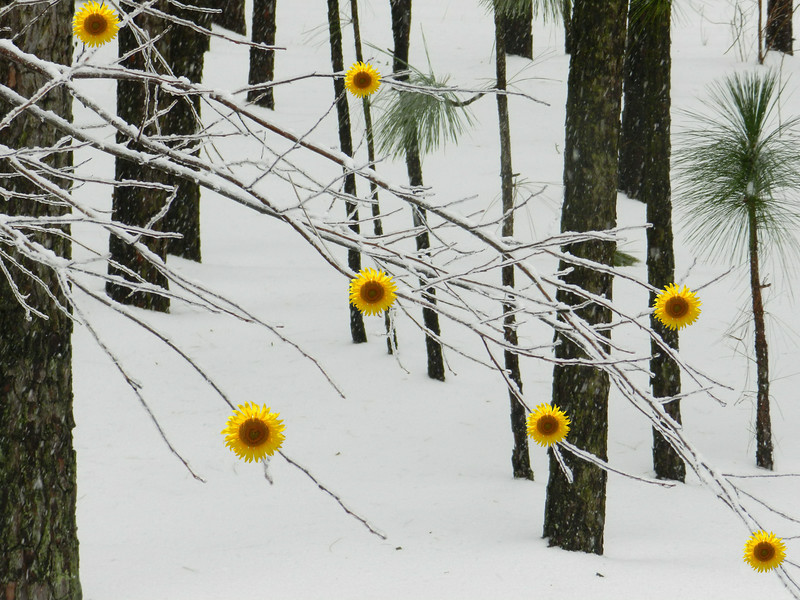 Creative-3rd-Class B-JoAnn Sluder-Winter Wonderland