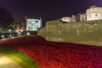 Christine_Tower Poppies-3149