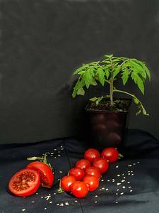 Tomato cycle