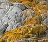 NOPN-A-3rd-Gene Lentz-Yellowstone Limestone Terrace