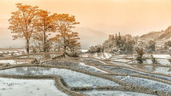 RobertK Autumn in the rice terraces