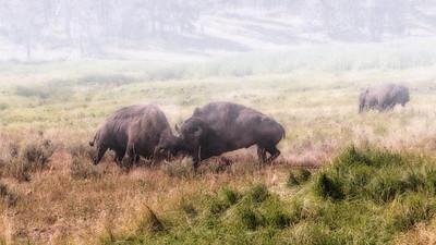 RobertK A Buffalo morning