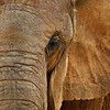 TWL-HM-Class A-Donna Ford-Elephants