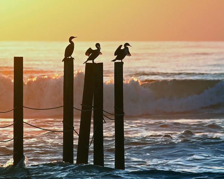 TWL-Class A-Debra Regula-Sunrise Birds on the Outer Banks