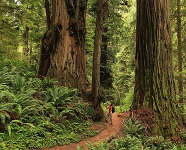 TWL-1st-Class B-Bill Bower-Majestic Redwoods
