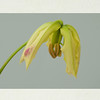 Gloriosa lily triptych