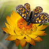 Paper Daisy and Butterfly