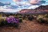 Desert Blossoms