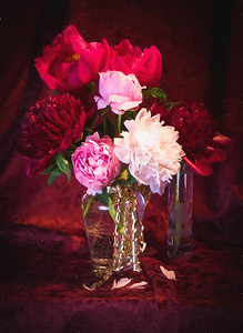my Degas red peonies