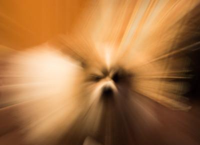 3-Intermediate-Altered_Reality_-_Open-DNP-Larry_Hardwick-PORCUPINE_DOG
