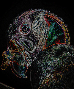 3-Intermediate-Altered_Reality_-_Open-3-Lloyd_Blackburn-Lined_King_Vulture
