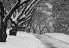 Cherry avenue with snow