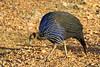 Pecking Bird