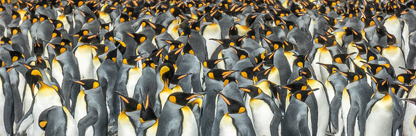 Penguin patterns