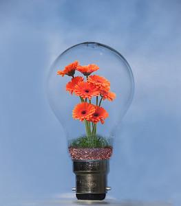 Flowering bulb