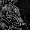 CLO-A-Brenda Hiscott-Stripes