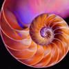 CLO-A-3rd-Jim Davis-Nautilus
