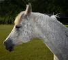 FRM-A-Don Hiscott-I'm Beautiful
