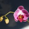 Flowers-A-HM-Chris Christiansen-Orchid