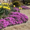 Flowers-A-Marti Derleth-Spring Awakening