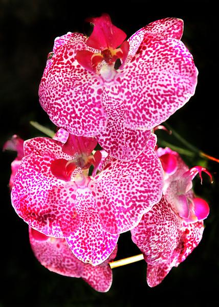 Flowers-A-Gene Lentz-Orchid Beauty