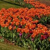 Flowers-A-Brenda Hiscott-Curve