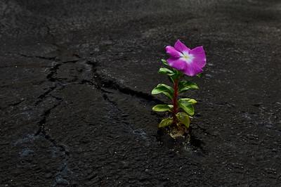 Flowers-A-3rd-Matt Smith-Nature Finds a Way