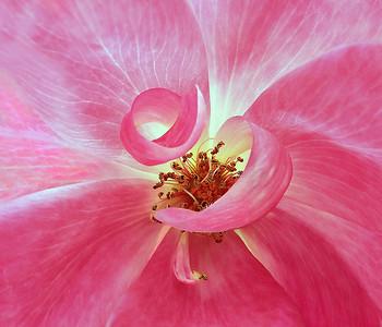 Flowers-A-2nd-Debra Regula-Natural Curls