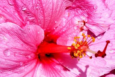 Flowers-B-3rd-Bill Stagg-Hawaii 1