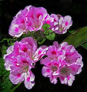 Flowers-B-HM-Joanne Lentz-Pretty Pink Posies