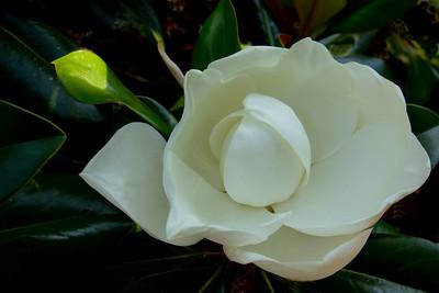 Flowers-B-1st-Bill Bower-Mag Blossom