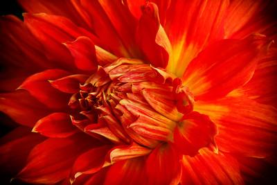 Flowers-A-HM-Tom Reedy-Nature's Beauty